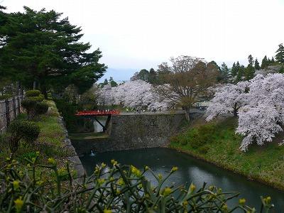 桜満開の鶴ヶ城_f0032130_17384480.jpg