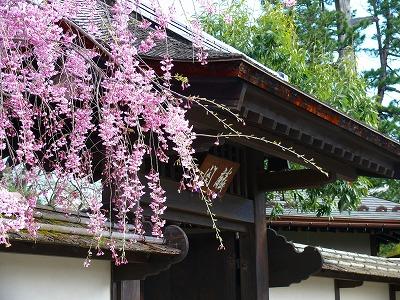 桜満開の鶴ヶ城_f0032130_17392351.jpg