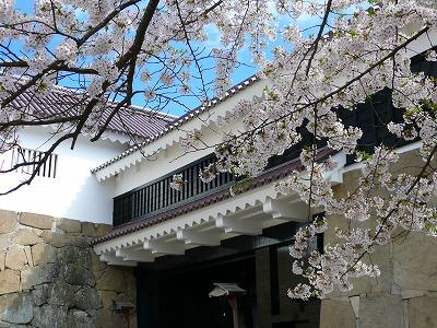 桜満開の鶴ヶ城_f0032130_17393989.jpg