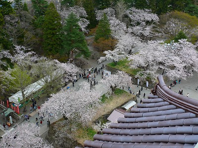 桜満開の鶴ヶ城_f0032130_17395684.jpg