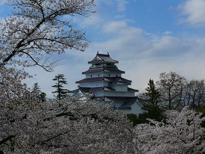 桜満開の鶴ヶ城_f0032130_17404946.jpg