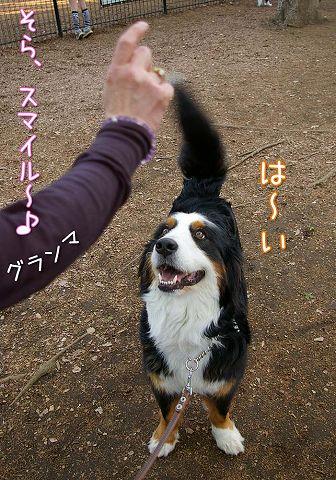 おっきな公園ウマウマ編_c0062832_5411931.jpg