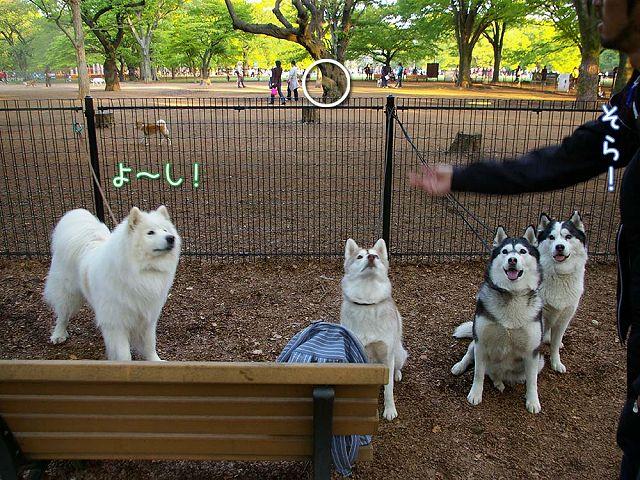おっきな公園ウマウマ編_c0062832_5413422.jpg