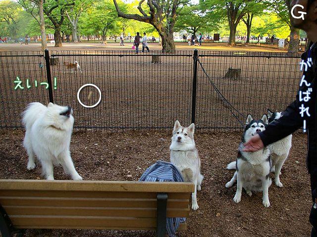 おっきな公園ウマウマ編_c0062832_5413927.jpg