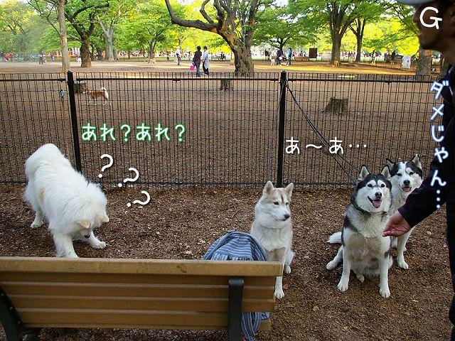 おっきな公園ウマウマ編_c0062832_5414770.jpg