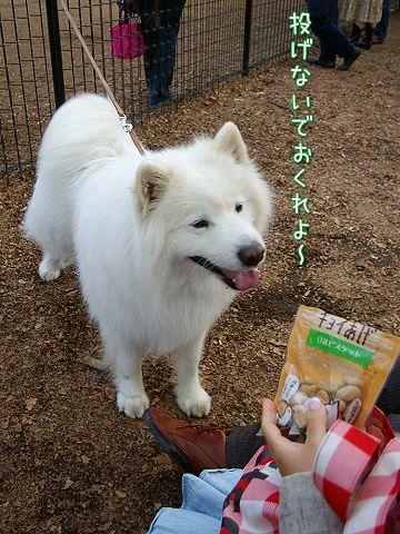 おっきな公園ウマウマ編_c0062832_5415384.jpg
