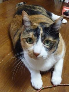 猫のお友だち マロンちゃんプリンちゃんミカンちゃん編。_a0143140_2156043.jpg