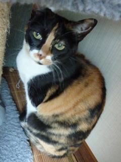 猫のお友だち マロンちゃんプリンちゃんミカンちゃん編。_a0143140_21563938.jpg