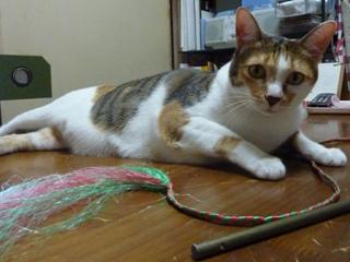 猫のお友だち マロンちゃんプリンちゃんミカンちゃん編。_a0143140_21571382.jpg