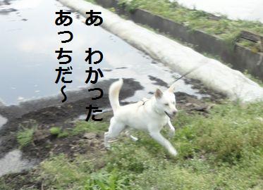f0195543_20552253.jpg