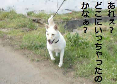 f0195543_205841.jpg