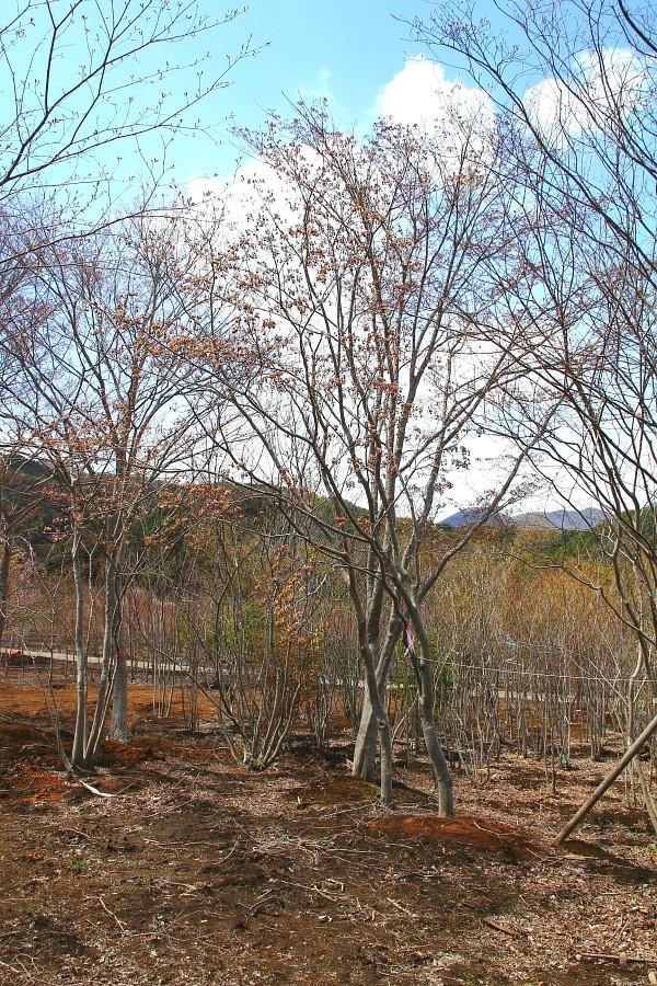樹木提案_c0112447_1848268.jpg