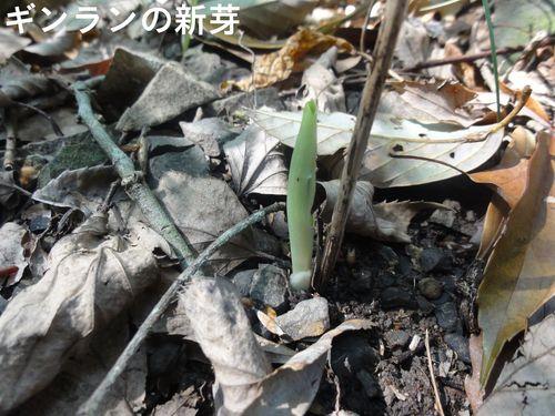 定例活動日:薪束作り_c0108460_18342295.jpg