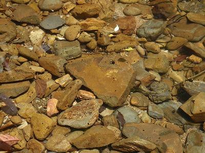 与那川の探索①_c0180460_051196.jpg
