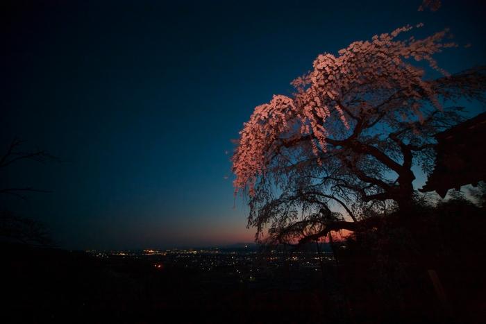 桜 2011 京都 <地蔵禅院>_f0021869_15204.jpg