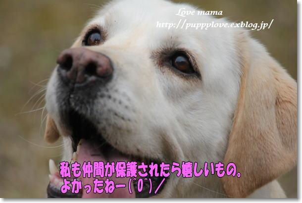 福島第1原発 20キロ圏内でペット犬救出作業!!_b0136683_922658.jpg
