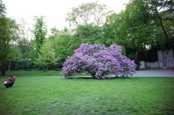 ベルリンは春爛漫。_c0180686_155213.jpg
