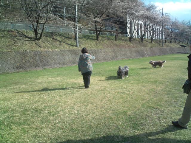 桜_e0038195_1603848.jpg