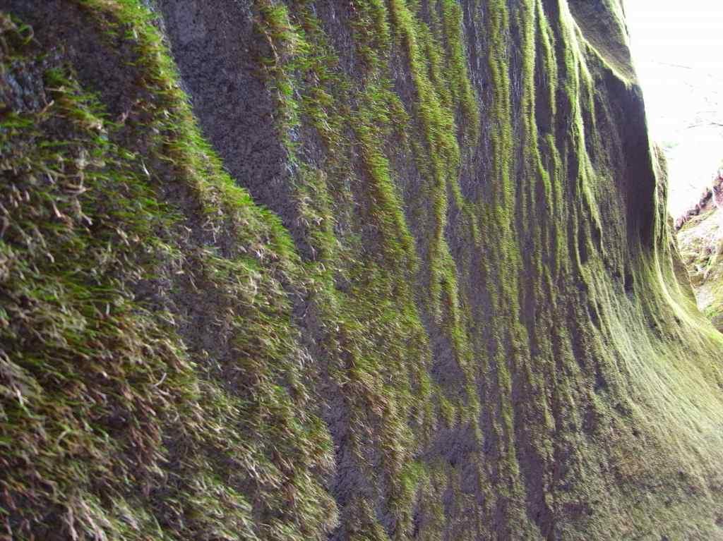 苔の洞門_f0138096_9262374.jpg
