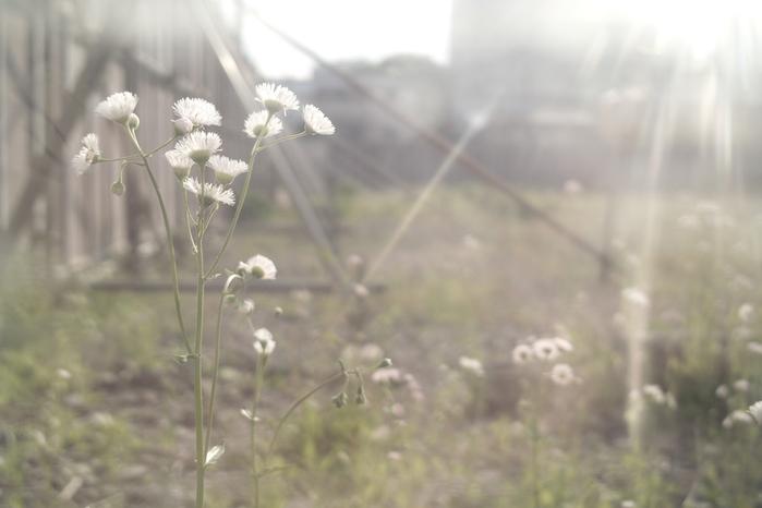 南麻布の花、その10。_c0120903_16131944.jpg