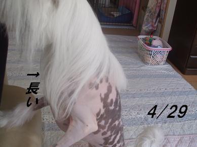 f0179203_15394924.jpg