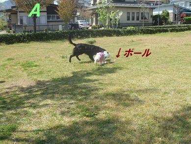 f0179203_167064.jpg