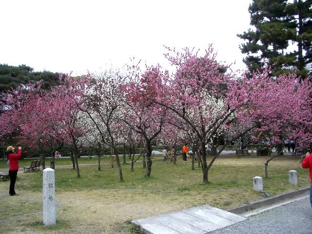京都花見旅行5_a0047004_1352084.jpg