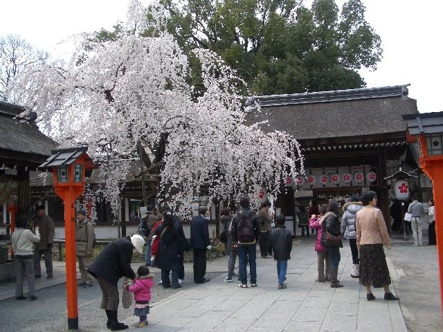 京都花見旅行5_a0047004_1411476.jpg