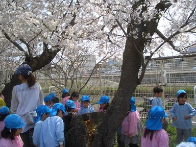 内野小学校へお花見に ...