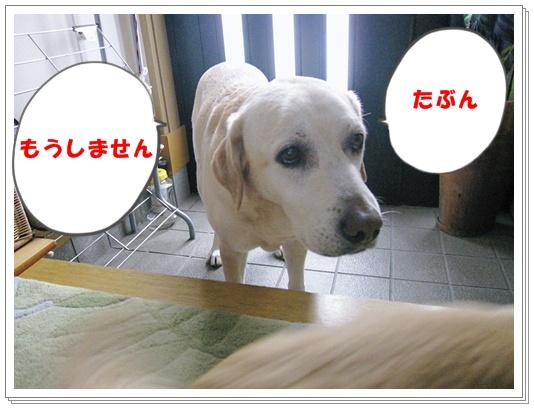a0197911_041299.jpg