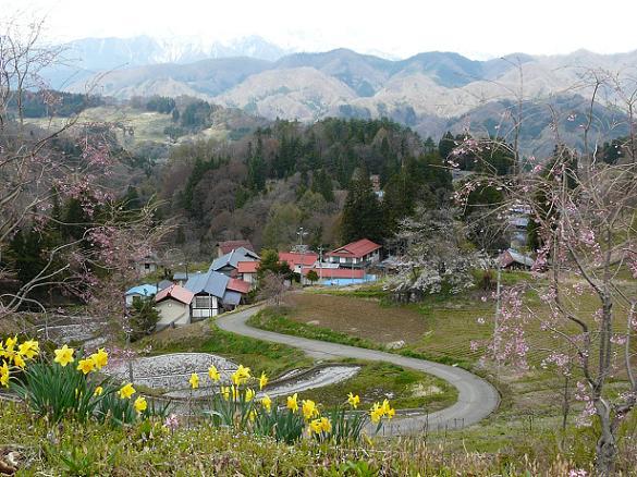 小川村の桜_d0066822_8415667.jpg