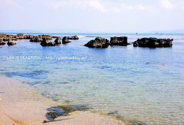 春の浜辺_d0083623_2055882.jpg