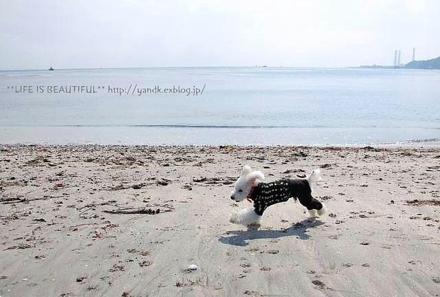 春の浜辺_d0083623_2105024.jpg