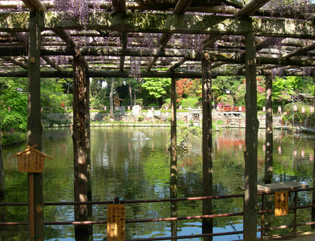 久伊豆神社の藤祭り&お水取り_e0125731_5191858.jpg
