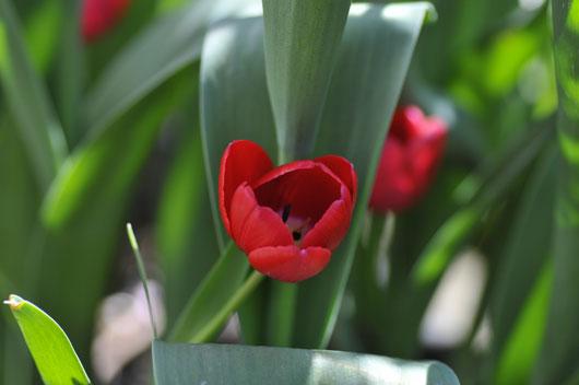 春の花達(2)_c0093046_6368100.jpg