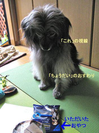 桜メッセージ募集終了のおしらせ_a0119263_2231675.jpg
