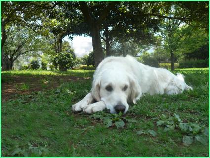 五月、緑の公園で。青山美女軍団。_e0236072_11113772.jpg