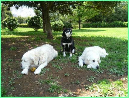 五月、緑の公園で。青山美女軍団。_e0236072_115471.jpg