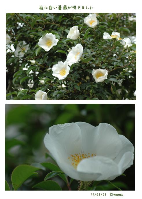 白い花_c0051105_23304946.jpg
