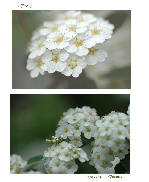 白い花_c0051105_23372178.jpg