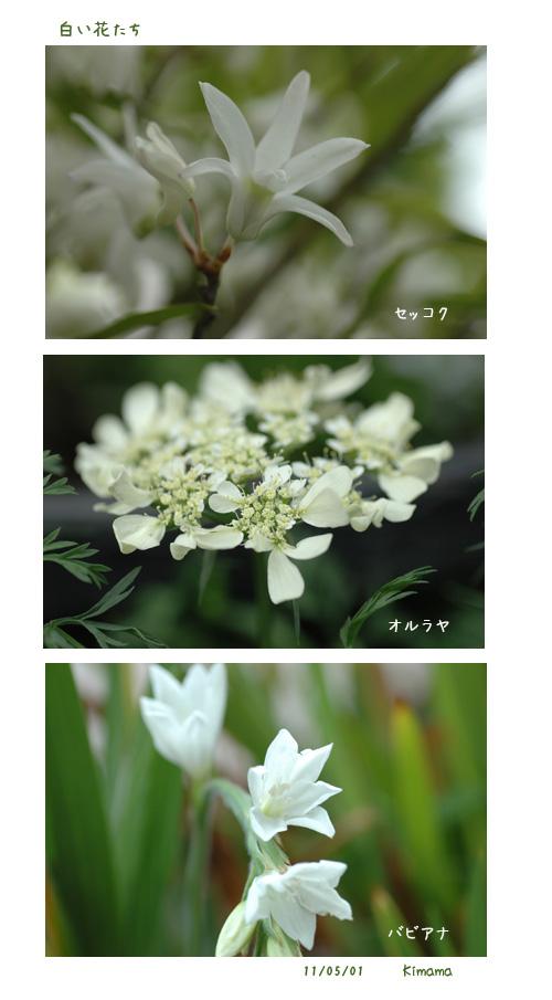 白い花_c0051105_2339290.jpg