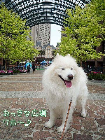 おっきな広場おば散歩_c0062832_526272.jpg