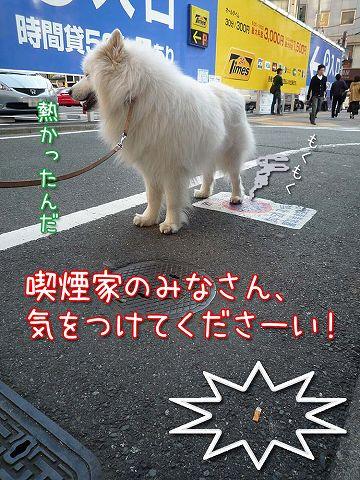おっきな広場おば散歩_c0062832_5274623.jpg