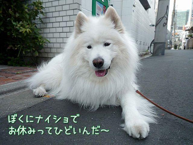 おっきな広場おば散歩_c0062832_5275985.jpg