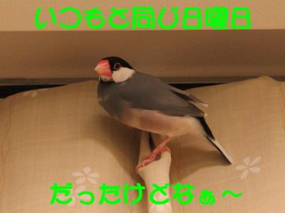 b0158061_21492994.jpg