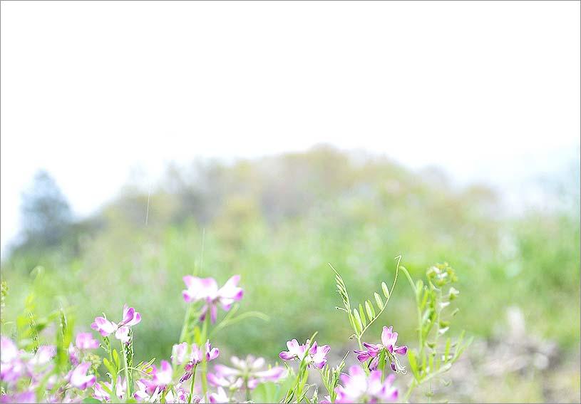 f0198771_0302012.jpg