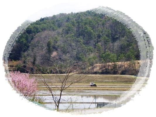 カエルの季節Ⅱ_a0199979_20413981.jpg