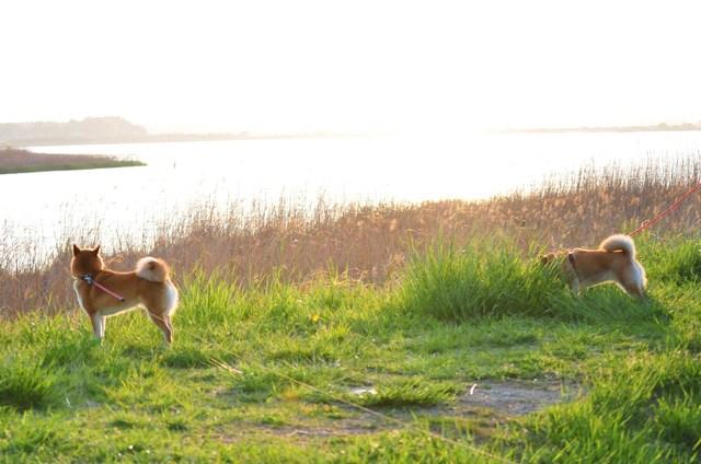 夕陽に向かって歩いていこう!_a0126590_19385448.jpg