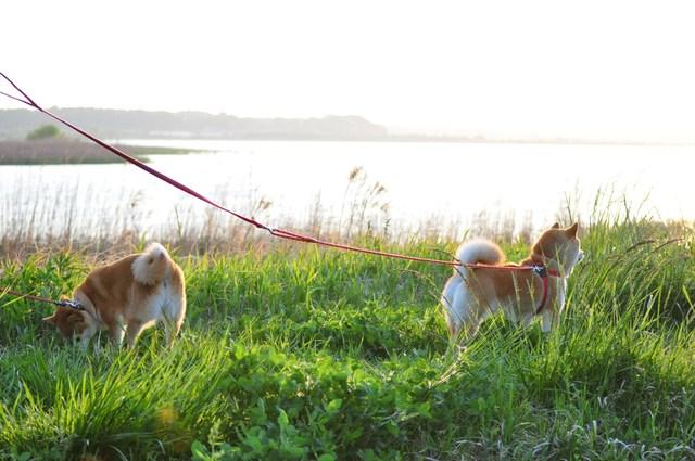 夕陽に向かって歩いていこう!_a0126590_1941575.jpg