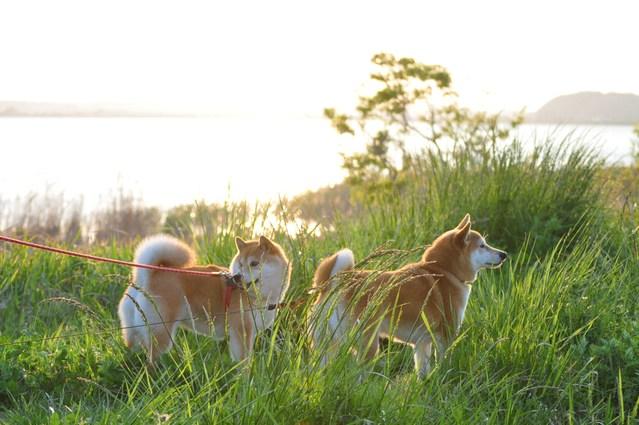 夕陽に向かって歩いていこう!_a0126590_1944235.jpg